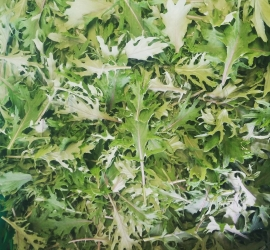 Beautiful baby kale, this is how kale should be eaten, tender and great  for eating raw